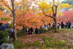 東福寺紅葉
