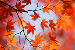 autumn-leaves_00004.jpg
